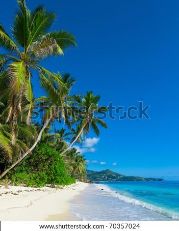 Panorama Jungle Shore