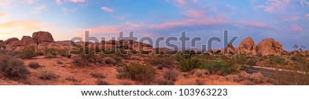 Panorama landscape of Joshua Tree National Park at sunset, USA. Driving road.