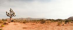 Panorama landscape of Joshua Tree National Park, USA.