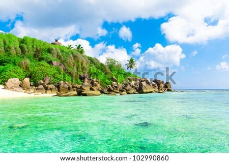 Panorama Landscape Palms