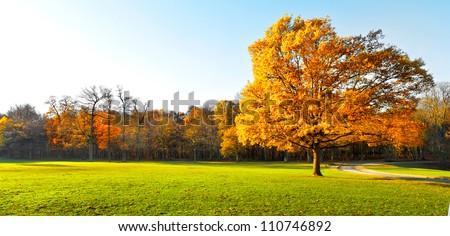 Stock Photo Panorama. Lonely beautiful autumn tree. Autumn Landscape.