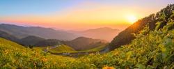 Panorama Maxican Sun Flower.Tung bua tong maehongson