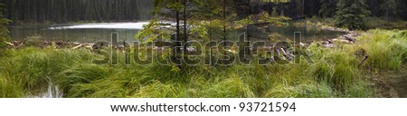 Panorama of a beaver dam in Alaska