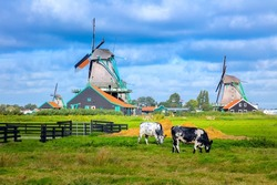 Panorama of a Dutch village with windmills, small houses, pastures and meadows. Agricultural landscape. Tourism. Famous Holland, The Netherlands, Europe.