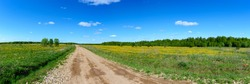 Panorama of a field covered with yellow flowers with a dirt road going to the horizon