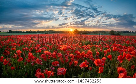 Photo of  panorama of a field of red poppies against the background of the evening sky