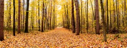 Panorama of a forest in Canada in fall