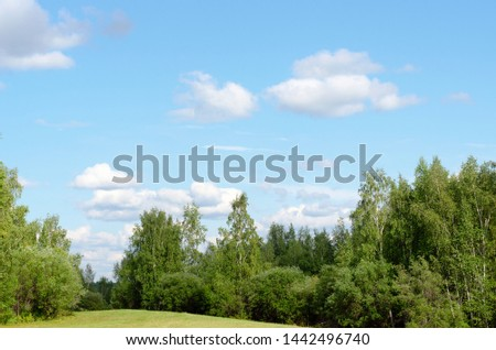 Panorama of a green meadow with grass on the hill among the birch trees in white clouds, surrounded by the Yakut of the Northern forest. #1442496740
