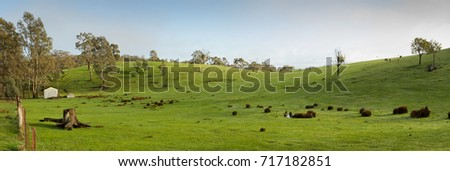 Panorama of a green paddock on a farm with shed, Dalesford, Victoria, Australia Foto d'archivio ©