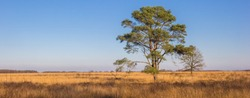 Panorama of a lonely tree on the Noordsche Veld nature area in Drenthe, Netherlands