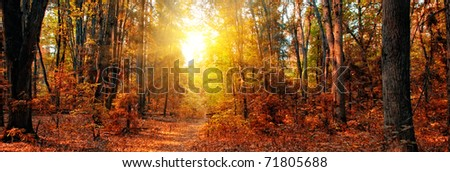 Panorama of a mixed forest at autumn sunny day - stock photo