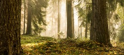 Panorama of a mixed forest at autumn sunny day/ Autumn Forest