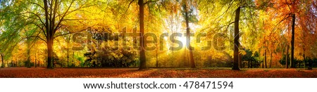 Stock Photo Panorama of a stunning forest scenery in autumn, a scenic landscape with pleasant warm sunshine