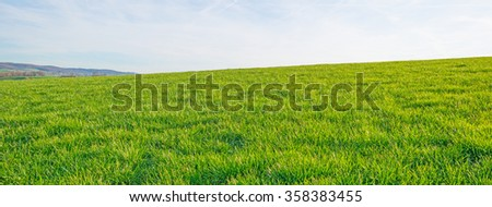 Panorama of a sunny green meadow on a hill  - Shutterstock ID 358383455