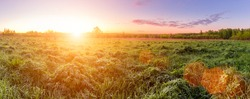 Panorama of a sunrise or sunset in a spring field with green grass, lupine sprouts, mist on the horizon and sky with morning clouds. Sunbeam on a foreground.
