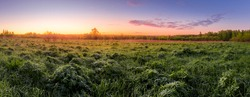 Panorama of a sunrise or sunset in a spring field with green grass, lupine sprouts, mist on the horizon and sky with morning clouds.