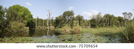 Panorama of a waterhole in the Kruger National Park of South Africa