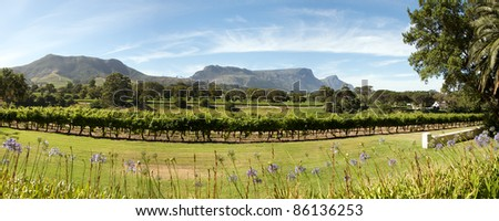 Panorama of a wine producer in Cape Town, South Africa.
