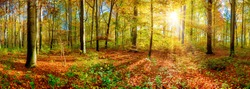 Panorama of an autumnal forest with bright sun shining through the trees