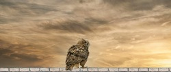 Panorama of an Eagle Owl. Sit on the ridge of a wall. Bird looks back, the red eyes stare at you. Beautiful dramatic brown and yellow sky with clouds in the background. Composite photo. Cover, social