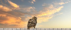 Panorama of an Eagle Owl. Sit on the ridge of a wall. Bird looks back, the red eyes stare at you. Beautiful dramatic blue and yellow sky with clouds in the background.  Cover, social media or web bann