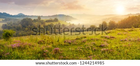 panorama of beautiful foggy sunset in mountains. purple thyme flowers on the grassy meadow. high mountain in the distance. wonderful landscape #1244214985