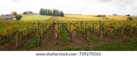 Panorama of beautiful landscapes of bordeaux Vineyards #739270561