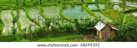 Panorama of beautiful rice field in Bali countryside