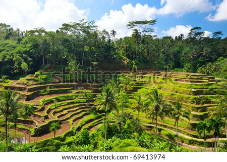 Panorama of beautiful rice terraces at Central Bali