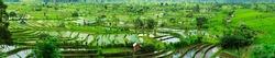 Panorama of beautiful terraced rice field on Bali Indonesia