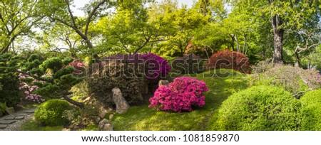panorama of blooming flowers...