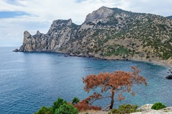 Panorama of Blue Bay of Black Sea near town Novyi Svit, Crimea. Pine with rusty coloured needles on foreground & mountain Karaul Oba on background. Short line of land on right side called Tzar Plage