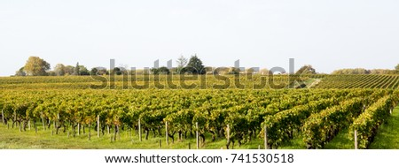 Panorama of Bordeaux made from grapes grown in estate vineyards #741530518