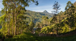 Panorama of Dalhousie town with Adams peak and tea plantations at sunrise, Srilanka, Asia