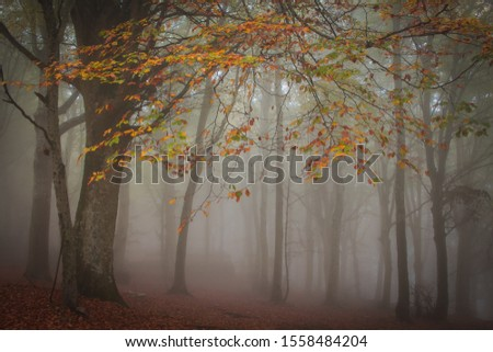 Panorama of foggy forest. Fairy tale spooky looking wood in a misty day. Cold foggy morning in mountain landscape stock photo