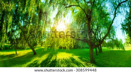 Panorama of green summer park. Sun shining through trees, leaves. Nature theme - Shutterstock ID 308599448