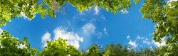 panorama of green trees in the sky