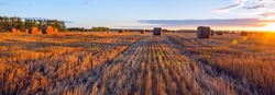 Panorama of  hay bales on the farm field after harvesting illuminated by the warm light of setting sun.