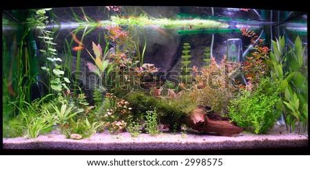 Panorama of large aquarium, natural lighting