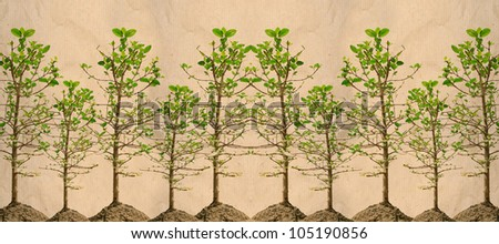 panorama of mangrove tree on paper texture