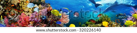 Panorama of marine species #320226140