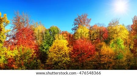 Panorama of multi-colored trees and autumn sun shining in the clear blue sky #476548366
