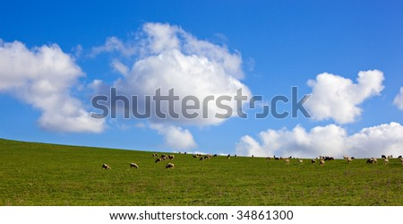 Panorama of sheep grazing on a lush green hillside meadow, with glorious sky behind.