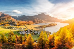 Panorama of Sils village and lake Sils (Silsersee) in Swiss Alps mountains. Colorful forest with orange larch. Switzerland, Maloja region, Upper Engadine. Landscape photography