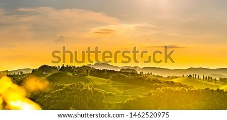 Panorama of South Styria Vineyards landscape in Eckberg near Gamlitz, Austria. View at Vineyard fields in sunset sun in summer. Tourist destination. #1462520975