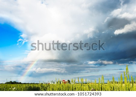 Panorama of spring field with rainbow, rye field after rain,  meteorological phenomenon, colorful rainbow in rural background #1051724393