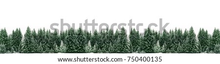Panorama of spruce tree forest covered by fresh snow during Winter Christmas time. The winter scene is almost duotone due to contrast between the frosty spruce trees, white snow foreground and sky #750400135