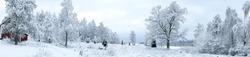Panorama of Swedish winter landscape