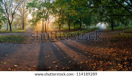 Panorama of the big maple alleys with yellow leaves on earth and sun rays, autumn landscape