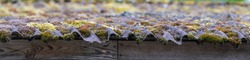 Panorama of the edge of the roof. green and yellow moss and algae on a slate roof.